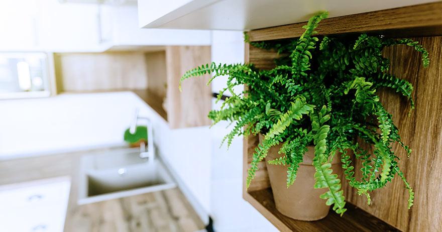 5 plantas para ter em casa